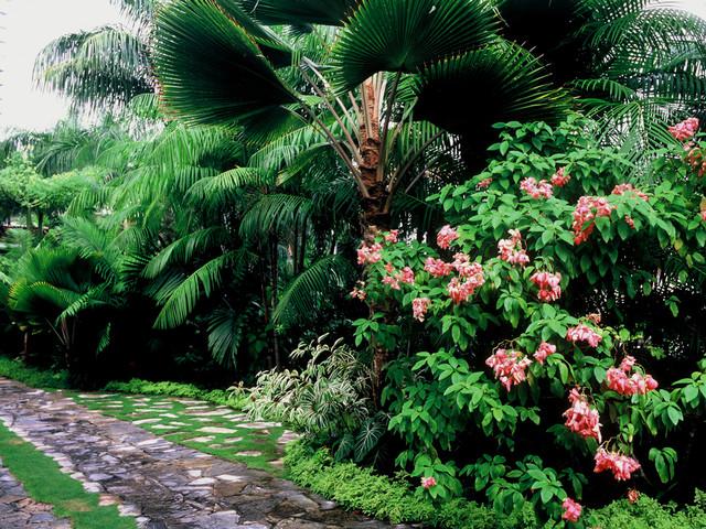 Panama Garden tropical landscape