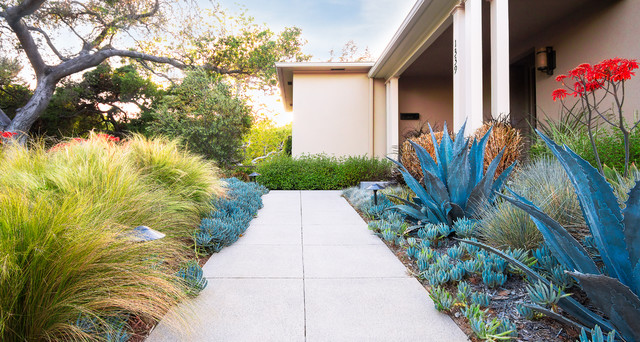 Pasadena Sustainable Planting Modern Landscape Los