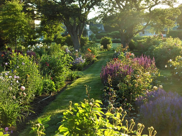 Inspiration for a contemporary partial sun landscaping in Portland Maine  for summer. - Perennial Garden In Late Afternoon - Contemporary - Landscape