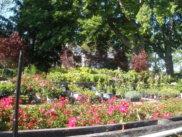 Perennial Gardens Office, Nursery & Grounds traditional-landscape