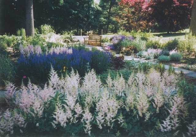 Perennial gardens we created on the Main Line traditional-landscape