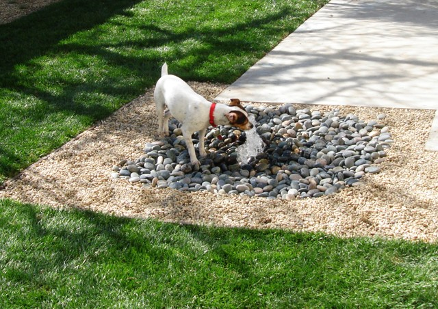 landscaping-with-shade-and-water-way-for-dog