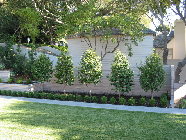 Elegant Piedmont   Contemporary   Garden   San Francisco   By Randy Thueme .