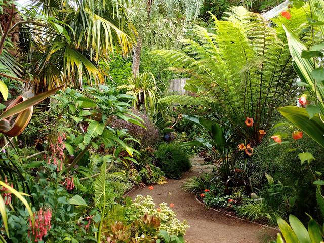 pina colada garden tropical landscape san francisco by derviss design. Black Bedroom Furniture Sets. Home Design Ideas