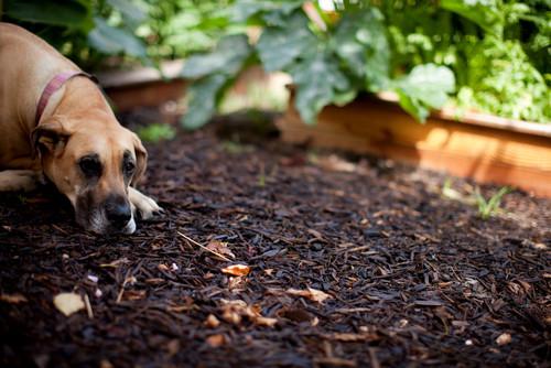 【Houzz】ペットが安全で快適に夏を過ごすためのポイント 14番目の画像