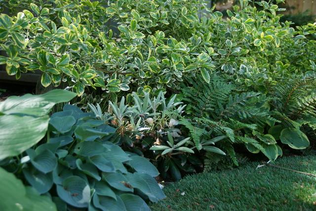 Plant Arrangements traditional-landscape