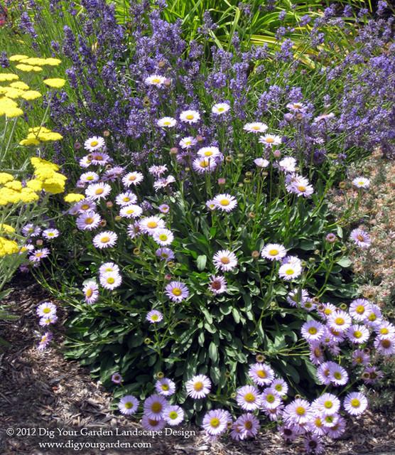 Plant Combinations For Northern California Gardens Mediterranean Landscape San Francisco
