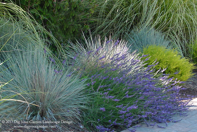 Plant Combinations For Northern California Gardens Mediterranean Landscape