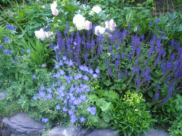 Plant combinations traditional landscape boston by for Garden design by kristen