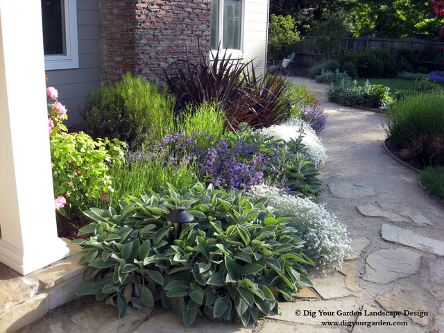 Plant Combinations Northern California Gardenstraditional Landscape San Francisco