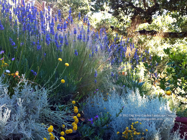 Plant Combinations - Northern California Gardens - Mediterranean - Landscape - san francisco ...