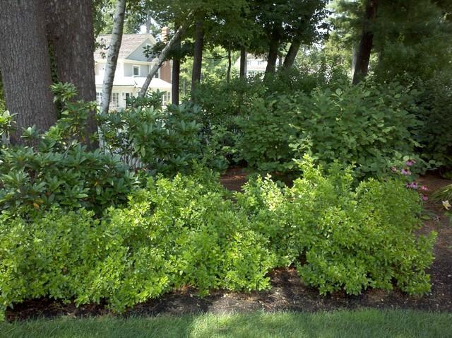 Planting Beds traditional-landscape