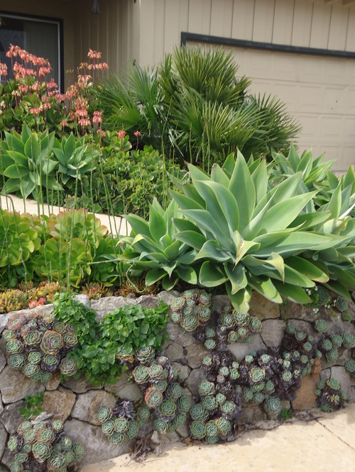 Outdoor Design with Succulents
