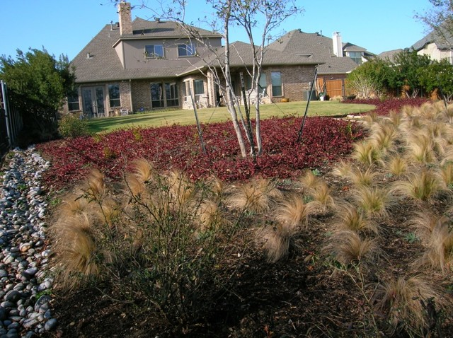 Plants for north texas modern landscape dallas by for Home turf texas landscape design llc