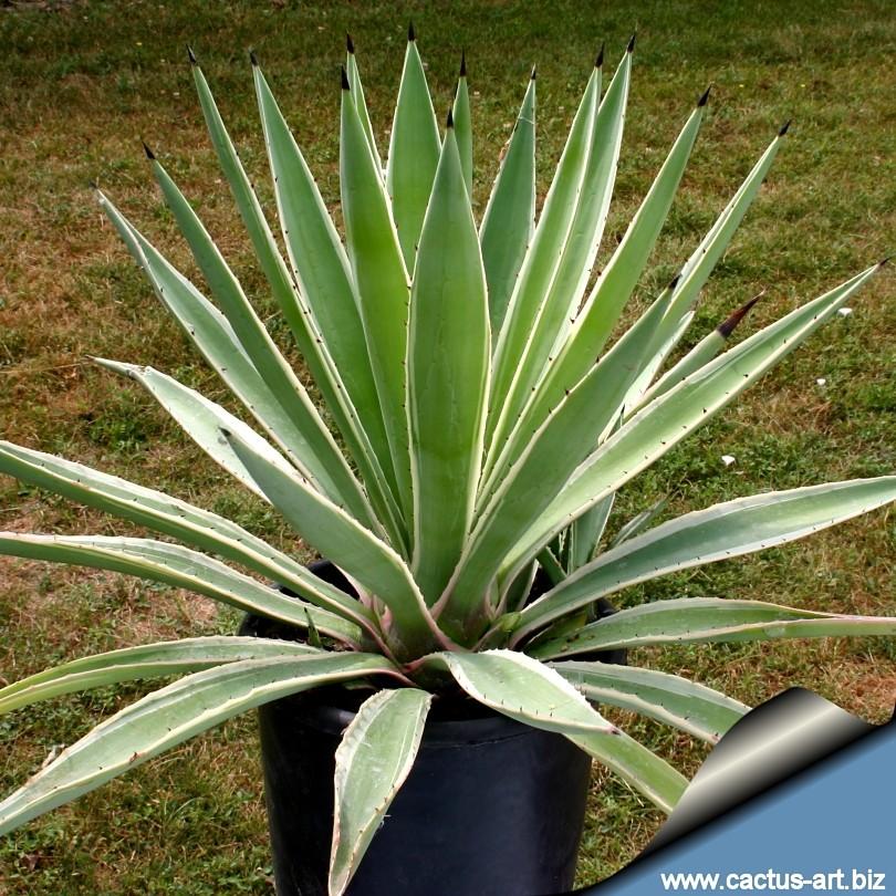 Plants I Really Like