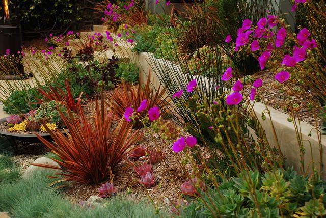 Superieur Playa Del Rey, CA Residence   Contemporary   Landscape   Los ...