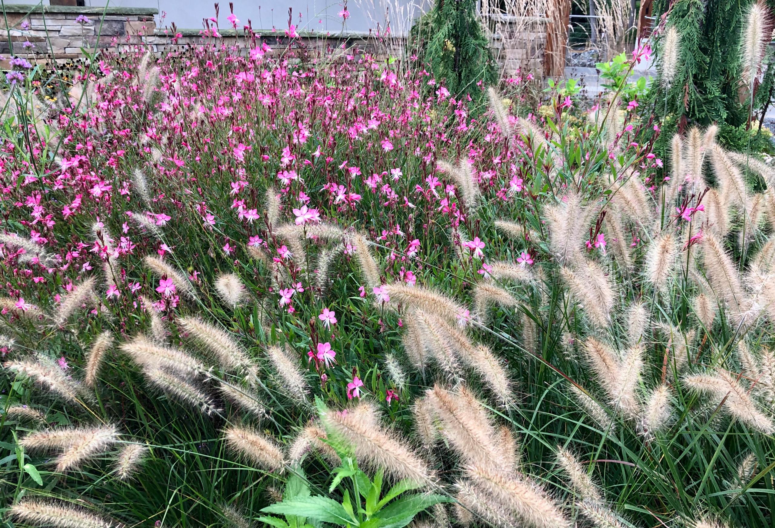 Pollinator-friendly front garden