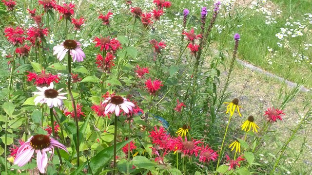 Pollinator Garden Rustic Landscape Other By Earth