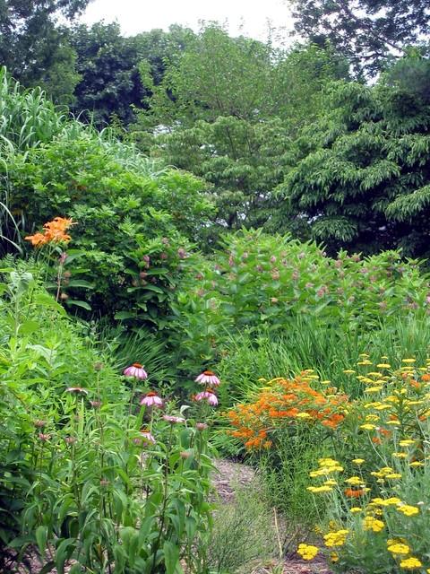 Pollinator Gardens Traditional Landscape Dc Metro