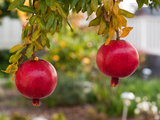 traditional landscape Fall Is Calling: What to Do in Your October Garden (10 photos)