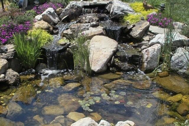 Pond builds tropical-landscape