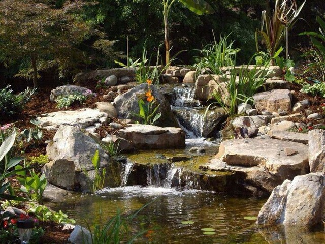 Pond builds tropical-landscape