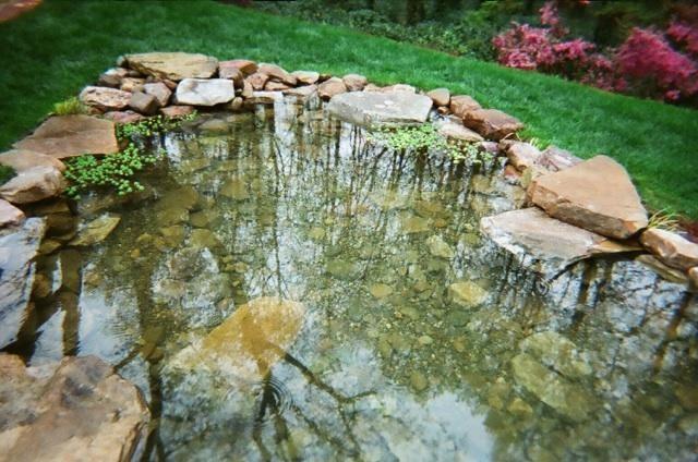 Pond traditional-landscape