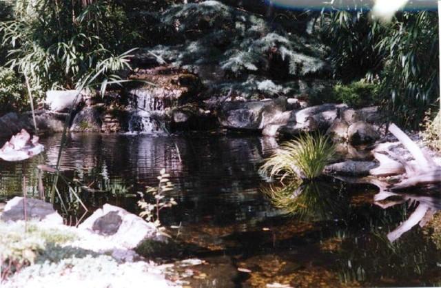 Ponds & Waterfalls tropical-landscape