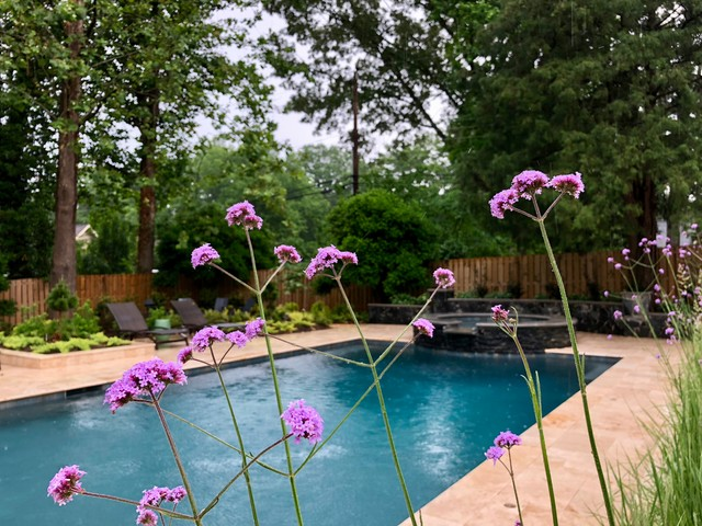 Pool-side Color Garden. contemporary-landscape