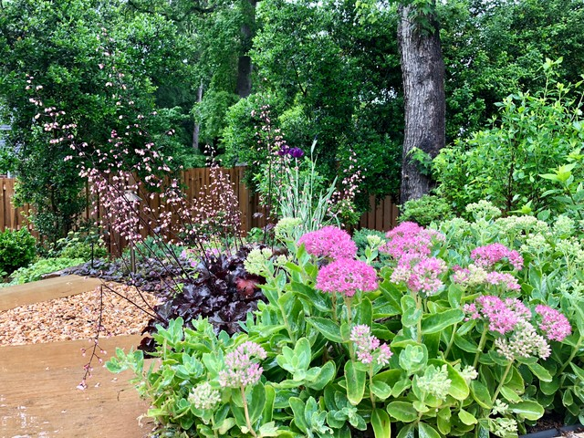 This is an example of a contemporary garden in Charlotte.
