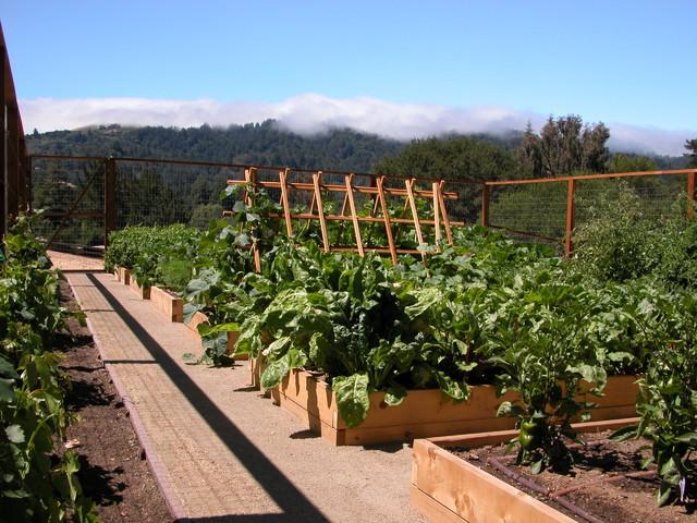 Landscape For Kitchen Garden :