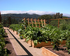Portola Valley Kitchen Garden contemporary-landscape