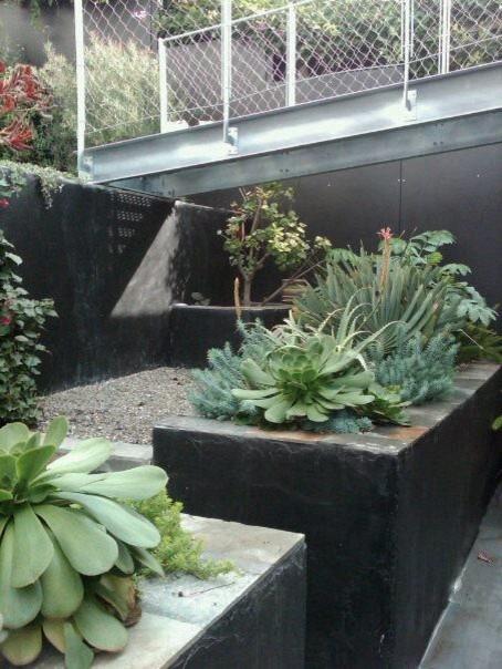 Potrero Hill Backyard / Flora Grubb contemporary-landscape