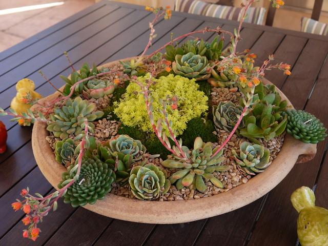 Potted Plant design contemporary-landscape