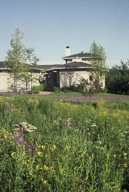 Prairie Landscape Eden Prairie MN