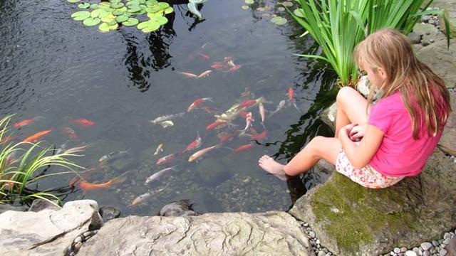 Premier Ponds Photos eclectic-landscape