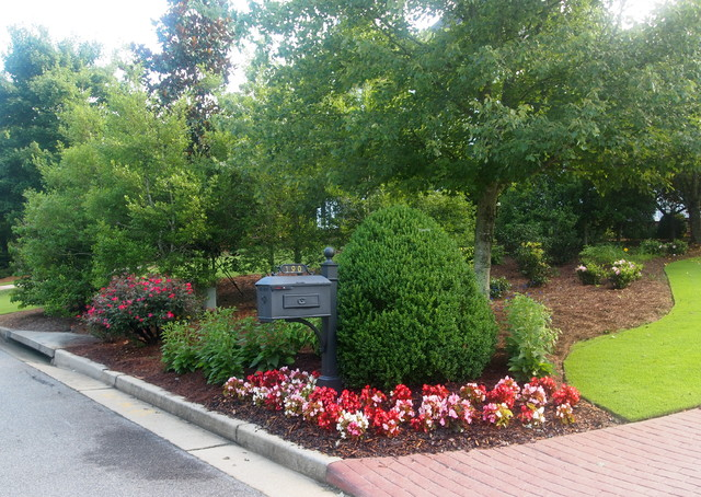 Pretty mailbox area with boxwood begonias knock out roses black