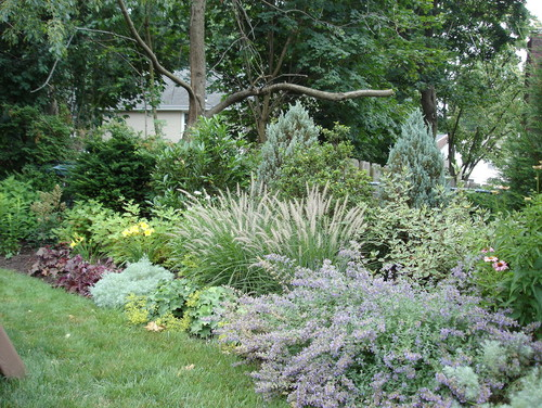 What Are The Mix If Plants Used For The Privacy Hedge