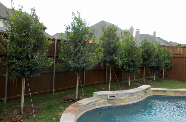 Privacy Screening With Tree Form Eagleston Hollies