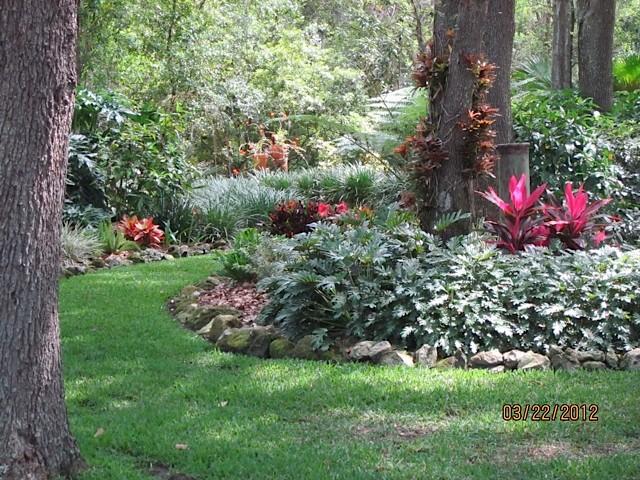 Brand New Landscaping Ideas Under Oak Trees Qx11 Roccommunity