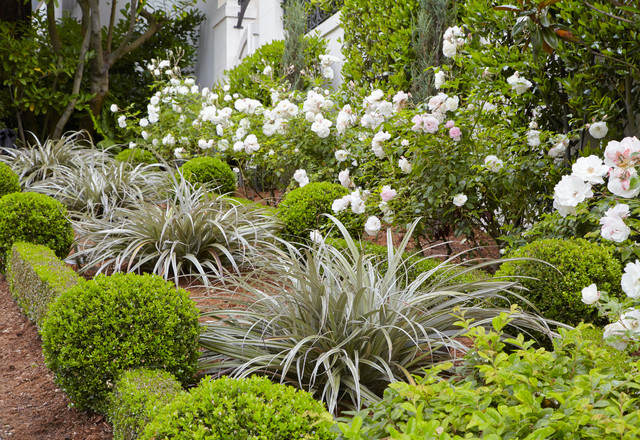 The 12 NZ Native Plants You Need to Know About | Houzz AU