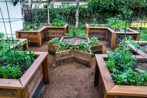 Here is a vegetable garden with four L shaped raised garden beds, as well as a star in the center. This is great orientation, and also allows the garden to have a visual appeal. Even someone that does not garden can appreciate the design of this area.