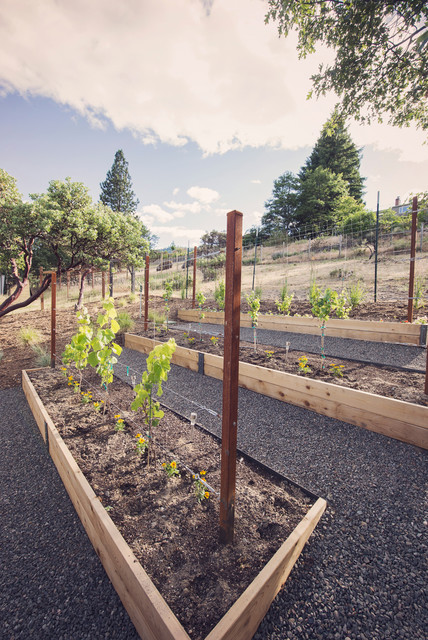 Raised Beds Grape Vine Trellis Modern Landscape