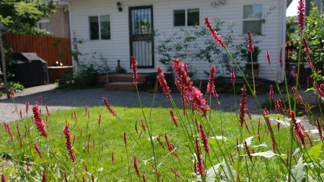 Rear Garden, Firetail in Flower traditional-landscape