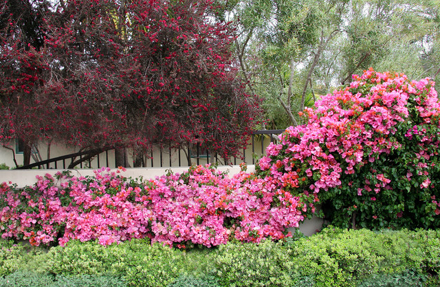 Red and pink mediterranean spring color mediterranean landscape santa barbara by donna - Mediterranean garden plants colors and scents ...