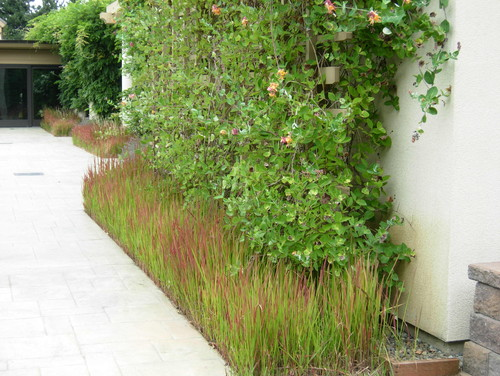 Landscaping with ornamental japanese blood grass for Oriental grass plants