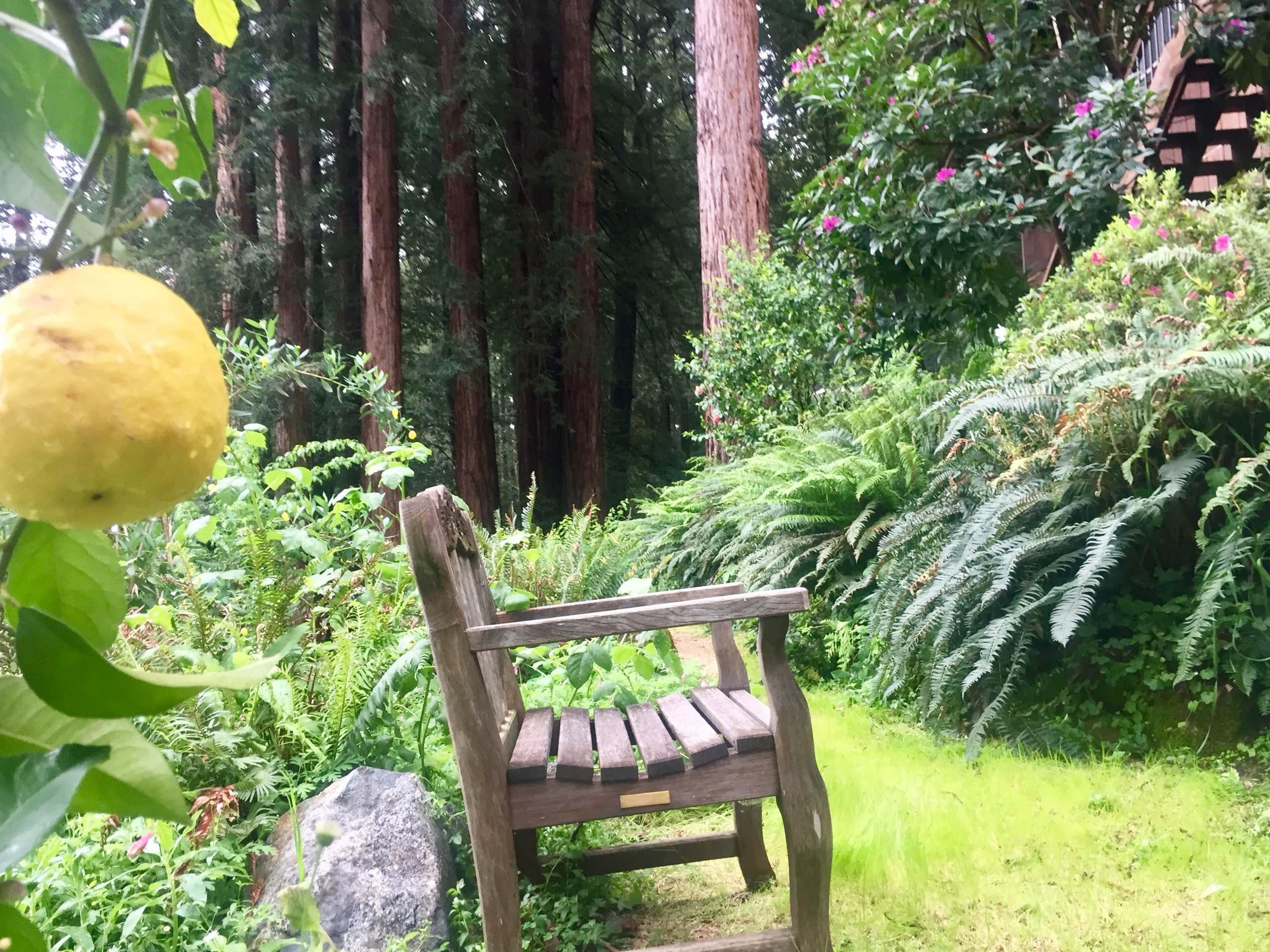 Redwood Living
