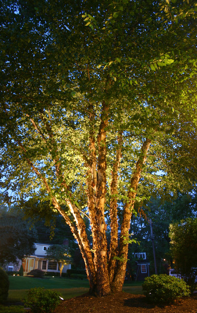 River Birch Tree Lighting Traditional Landscape Other By Outdoor Lighting Perspectives