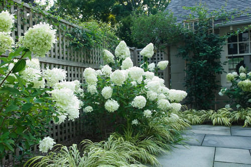 This rustic and natural looking lattice fence backs some flower bushes.