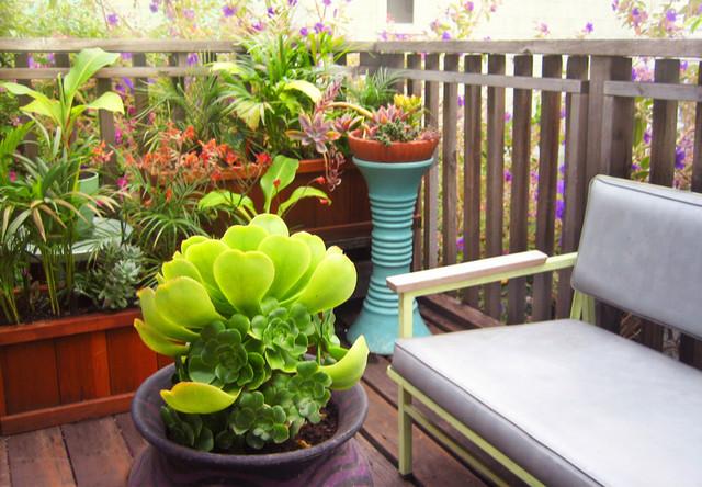 Roof Deck with Succulents eclectic-landscape